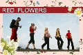 Travel photo templates Red Flowers